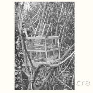 Vintage Cage Finch Trap