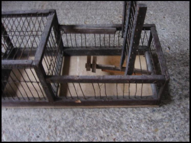 Finch Trap Cage http://hawaiidermatology.com/finch/finch-trap-cage.htm